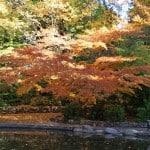 Fall Colors in Lithia Park in Ashland, Oregon