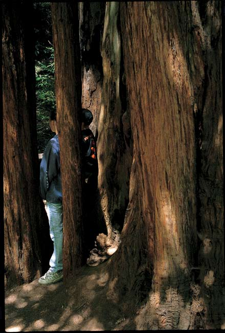 Young hikers on a trail in Muir Woods National Monument.