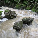 Tilden Regional Park waters flow strong after recent rains. (Photo by Gambolin' Man)