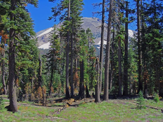 Lassen Peak from the Manzanita Creek trail