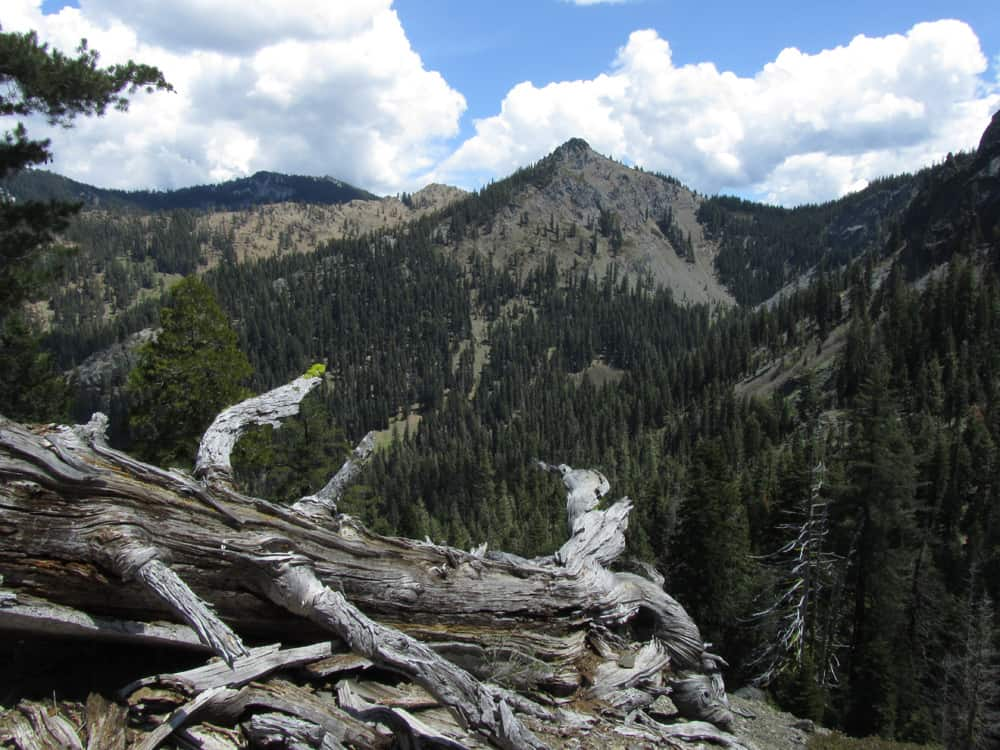 Hidden Lake Trail, Trinity Alps Wilderness. The Pacific Crest Trail runs through the forest in the distance.