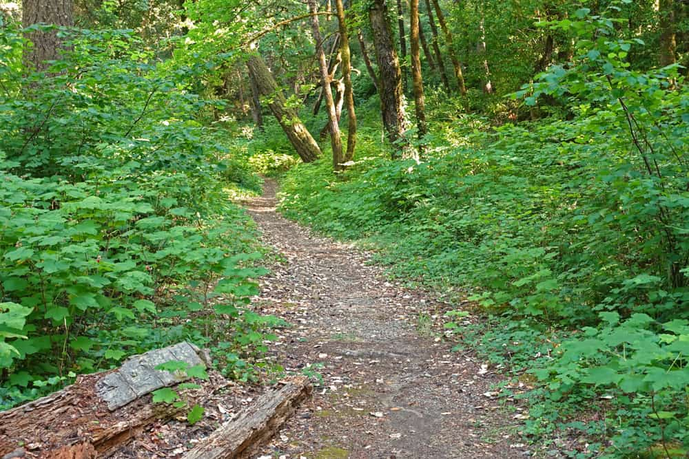 The French Hill Trail near the Smith River National Recreation Area Visitor Center and US Highway 199 passes thimbleberry and bigleaf maple trees.