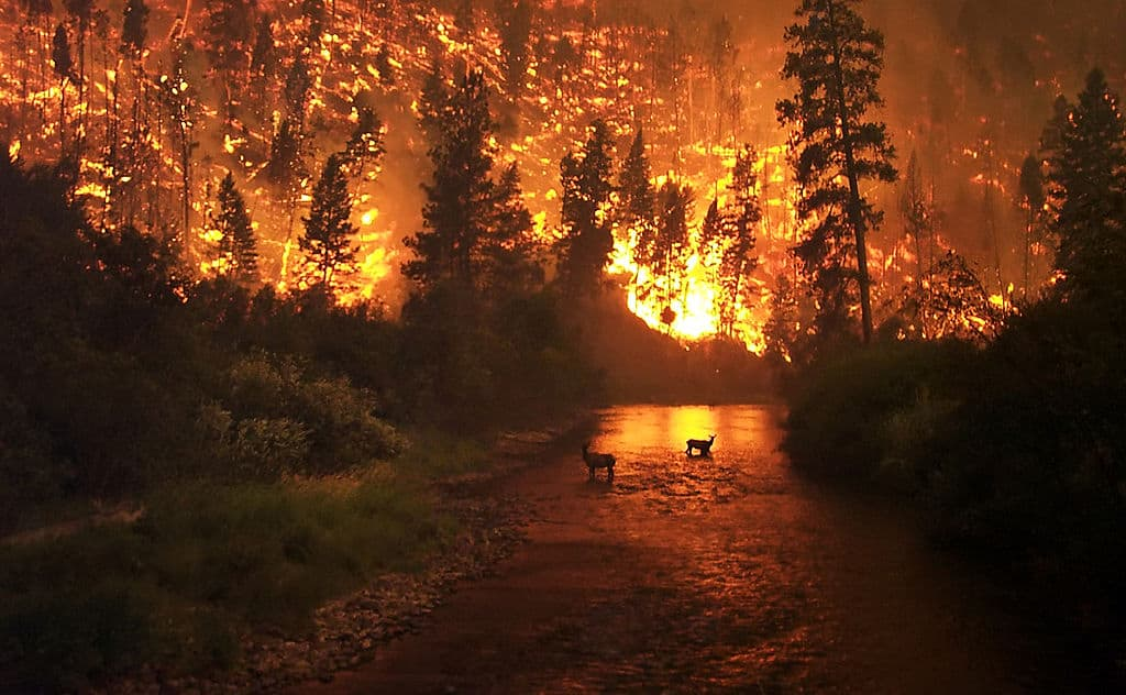 If you are hiking and encounter a wildfire, a river or lake can be a good place to increase your chances of survival.