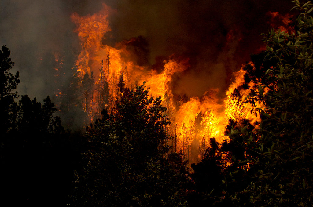 Wildfires can roar quickly through forests. If you encounter a wildfire when hiking, get out of forests to an open area.