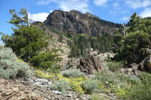 Sierra Buttes from the Pacific Crest Trail. Lots of wildflowers and metamorphic rock.