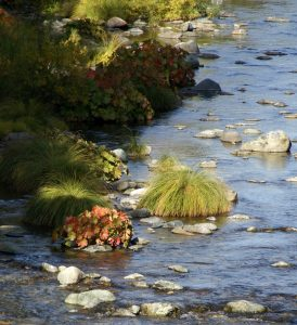 The Upper Sacramento River with beautiful fall foliage, just upstream of Sims Flat Campground