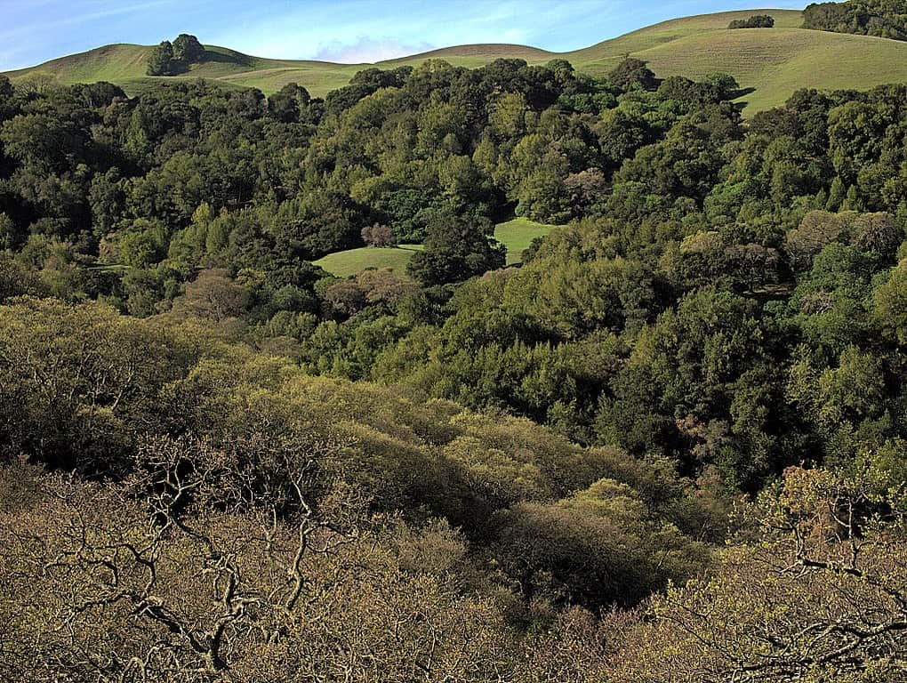 You hike the Old Briones Road trail on your way to Briones Peak, the top destination in Briones Regional Park.