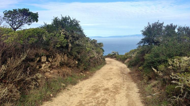 Hike to North Peak Montara Mountain and get gorgeous views of the Pacific Ocean and Highway 1 from the North Peak Access Road trail.