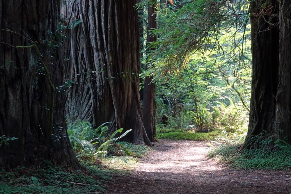 Redwood backpacking trips in Northern California's San Francisco Bay Area are best in spring, but you can do them in summer, fall, and winter also.