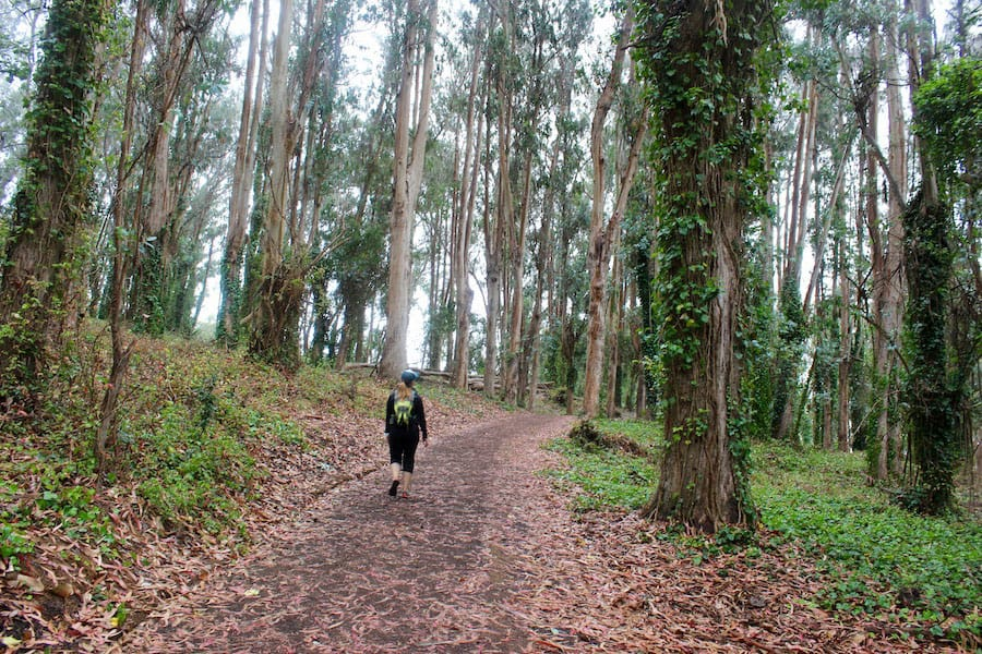 The Presidio Bay Area Ridge Trail lets hikers enjoy a taste of nature in the city and often enjoy solitude at the same time.