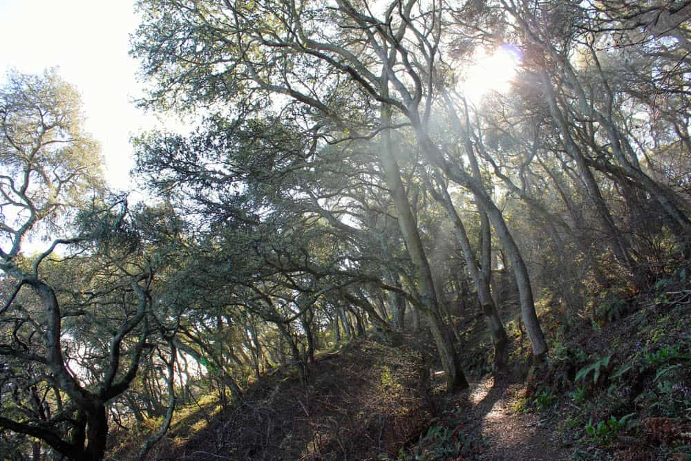 Angel Island has many trails for hikers. Many stretches of path are shaded.