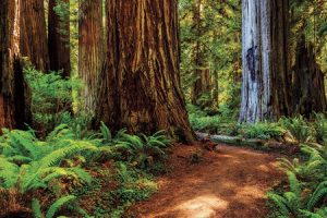 Pre-Order Hike the Parks: Redwood National and State Parks
