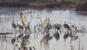 Exploring Cosumnes River Preserve's Hiking Trails: Birding Paradise Beside I-5