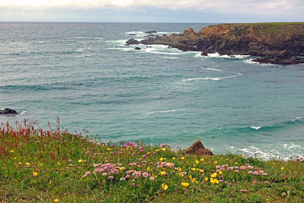 A hiking trail at Jug Handle State Natural Reserve leads to bluffs above the ocean: a prime whale-watching spot.