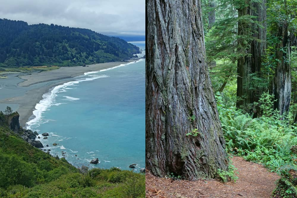 Highway 101 on the North Coast of California: beaches, redwoods, hiking trails, campgrounds... so much to explore!