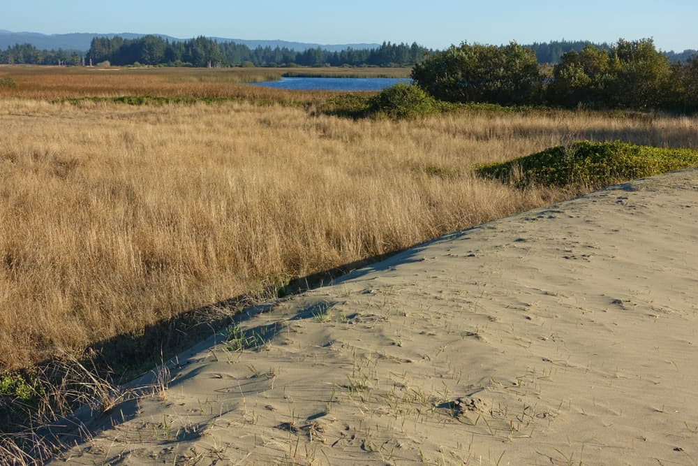 Lake Earl Wildlife Area: Tolowa Dunes and Cadra Loop Trail. Close to Highway 101 and Crescent City with great hiking.