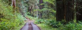 A short drive from Highway 101, Lost Man Creek Trail wanders through gorgeous scenery in Redwood National Park.