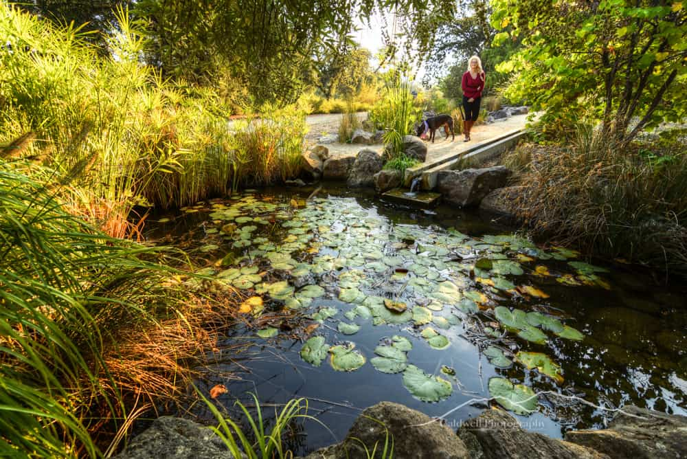 McConnell Arboretum and Botanical Gardens Walking Trail: heart of Redding's Turtle Bay, accessed by the Sundial Bridge.