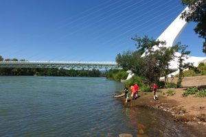 Walking Redding's Turtle Bay Trails: Arboretum Loop from Sundial Bridge