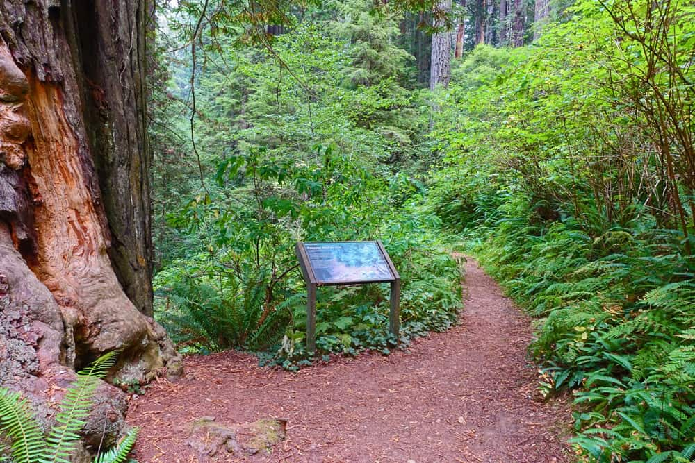 Three informational signs along the Ah-Pah Interpretive Trail explain road removal and slope rehabilitation in the redwood forest.