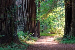 Redwood National and State Parks: Key Facts and Statistics