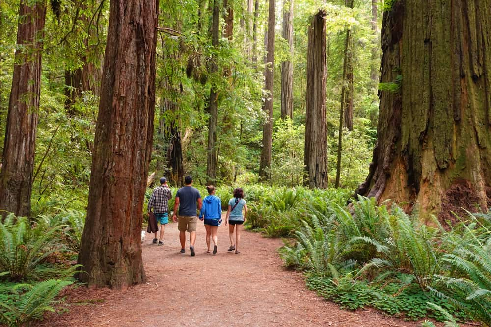 Redwood National and State Parks Facts and Statistics: visitors enjoy hiking the Stout Grove Trail in Jedediah Smith Redwoods State Park.